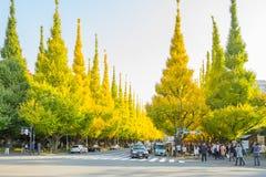 Muito carro na estrada sob árvores da nogueira-do-Japão na avenida de Icho Namiki Foto de Stock