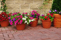 Muito Clay Flowerpots With Blooming Plants na parede de pedra foto de stock royalty free