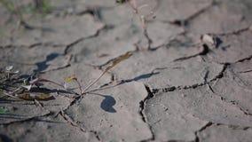 Muito close-up do solo seco sem terra Quebras agradáveis A câmera está no movimento video estoque