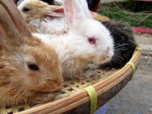Muito coelhos para a venda Fotografia de Stock