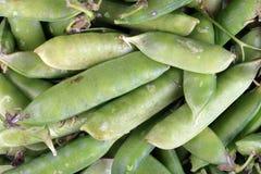 Muito ervilha verde no dia Imagem de Stock Royalty Free