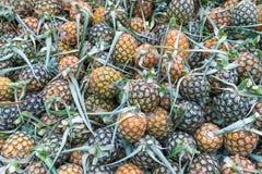 Muito fruto do abacaxi fotos de stock