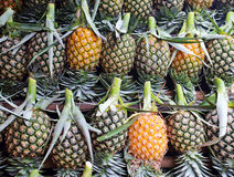 Muito fruto fresco do abacaxi Fotografia de Stock Royalty Free