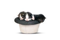 Muito gatinho dos littles em um chapéu no fundo branco puro Imagens de Stock Royalty Free