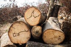 Muito madeira cutted Fotos de Stock
