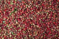 Muito morango da floresta no fundo Foto de Stock Royalty Free