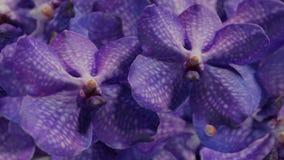 Muito orchidea violeta, ilustração ajustada do fundo 3d da flor da orquídea Foto de Stock Royalty Free