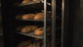 Muito pão fresco pré-feito em um forno de padaria em uma padaria Negócio da panificação Pão fresco dos cereais com sementes Imagem de Stock Royalty Free
