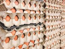 Muito painel fresco do ovo empilhado nas camadas fotografia de stock