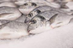 Muito peixe está no contador no gelo Imagem de Stock