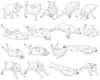 Muito pose do cão ilustração do vetor