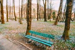 Muitos açafrões na grama nas madeiras perto da loja Um campo o Imagem de Stock Royalty Free