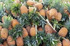 Muitos abacaxis imagem de stock