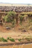 Muitos animais hoofed na costa Masai Mara, Kenya fotografia de stock royalty free