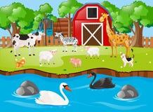 Muitos animais no pátio Imagem de Stock Royalty Free