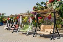 Muitos balanços coloridos no parque bonito completamente de potenciômetros de flor Foto de Stock