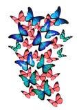 Muitos buterflies diferentes Foto de Stock