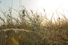 Muitos caracóis na grama seca Foto de Stock Royalty Free