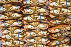 Muitos caranguejos da laranja no mercado com elásticos azuis em garras imagens de stock