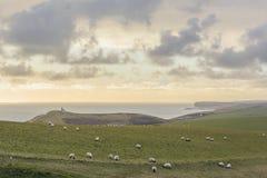 Muitos carneiros na exploração agrícola Fotos de Stock Royalty Free