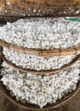 Muitos casulos de seda nas bandejas de bambu imagem de stock royalty free