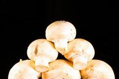 Muitos cogumelos brancos unpeeled crus pequenos Fotos de Stock Royalty Free
