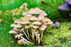 Muitos cogumelos no jardim Imagem de Stock
