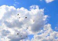 Muitos de pássaros de voo foto de stock