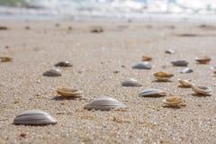Muitos escudos no Sandy Beach fino imagens de stock royalty free
