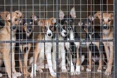 Muitos filhotes de cachorro travaram na gaiola foto de stock