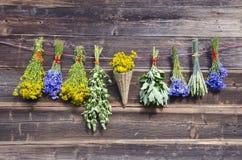 Muitos grupos médicos das ervas do verão na parede de madeira Imagem de Stock Royalty Free