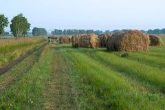 Muitos monte de feno perto da estrada no campo Imagem de Stock Royalty Free