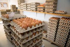 Muitos ovos Fotos de Stock Royalty Free