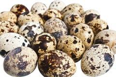 Muitos ovos de codorniz Foto de Stock