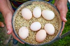 Muitos ovos na placa com as colheitas nas mãos da mulher Imagem de Stock Royalty Free