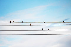 Muitos pássaros Imagens de Stock