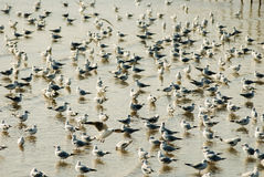 Muitos pássaros bonitos imagens de stock