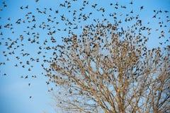 Muitos pássaros na árvore Fundo para um cartão do convite ou umas felicitações Fotografia de Stock Royalty Free