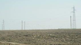 Muitos pássaros que voam na perspectiva de um trator com uma unidade da sementeira video estoque
