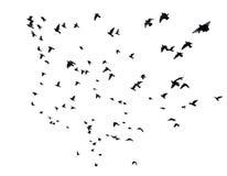 Muitos pássaros que voam no céu imagens de stock