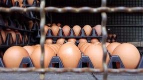 muitos painéis do plástico com os ovos frescos na extremidade da camionete imagens de stock royalty free