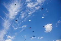 Muitos papagaios no céu azul com nuvens brancas Imagem de Stock
