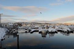 Muitos patos que nadam entre barcos cobertos de neve Imagens de Stock Royalty Free