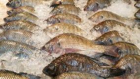 Muitos peixes Fotos de Stock