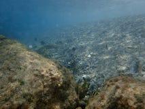 Muitos peixes diferentes no Mar Vermelho Imagens de Stock Royalty Free