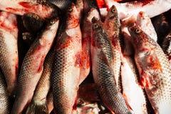 Muitos peixes frescos bonitos opõem-se Close-up Fotos de Stock