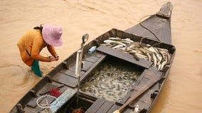 Muitos peixes no barco com woma do pescador Fotos de Stock