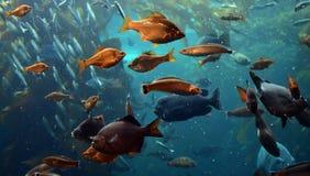 Muitos peixes no oceano foto de stock