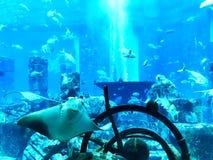 Muitos peixes travaram debaixo d'água foto de stock