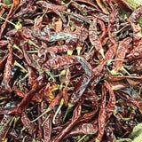 Muitos pimentões secados para usos do fundo Foto de Stock Royalty Free